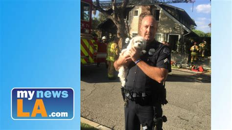 dog house pasadena tiny terrified pooch saved from flames by s pas cop heroes mynewsla com