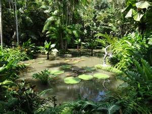 How Much Is Botanical Gardens 72 Hours Stopover In Singapore 14 Things To Do Swiss Nomads