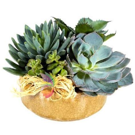fiori a domicilio cagliari composizione di piante grasse in ciotola o cesto