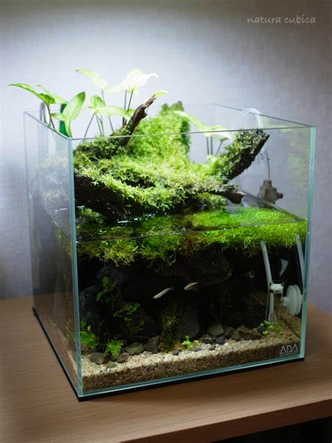small aquarium aquascape aquascape nature aquarium nano tank fiischlies