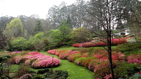 rhododendron garten 7 reasons to visit the national rhododendron garden