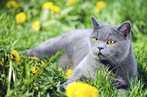 chamomile safe for cats list of safe herbs for cats cuteness