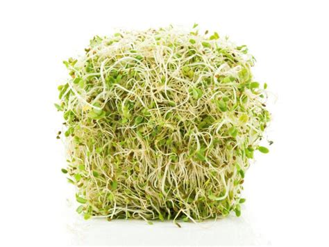 Sprouts Sweepstakes - raw sprouts good or bad food network healthy eats recipes ideas and food news