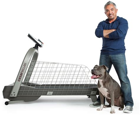 how to get cesar millan to your how much food to feed your puppy what to spray on furniture to keep dogs from