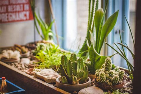 indoor plant light guide  house plants