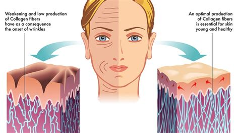 Collagen Skin best collagen supplements for healthy younger looking skin