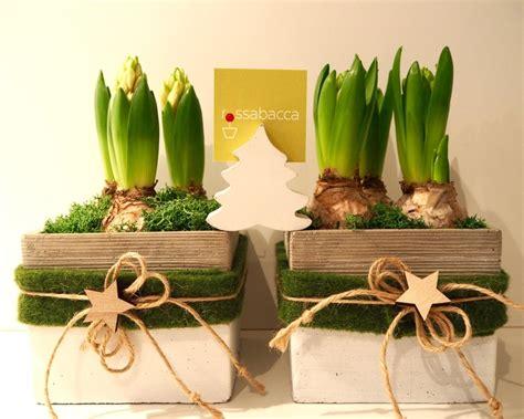 bulbi di giacinto in vaso bulbi di giacinti bianchi d inverno rossabacca
