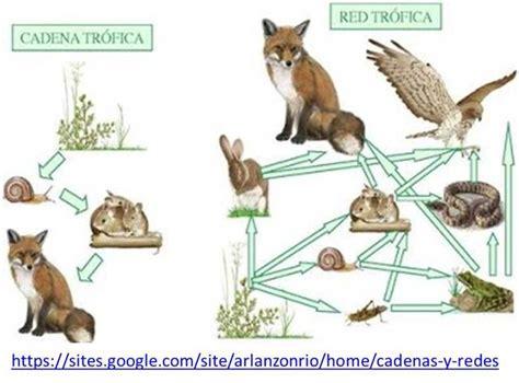 cadena alimentaria y red trofica diferencia evoluci 211 n del concepto cadena y red tr 211 fica timeline