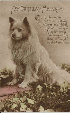 real pomeranian 1000 images about pomeranians on pomeranian dogs pomeranian puppy and