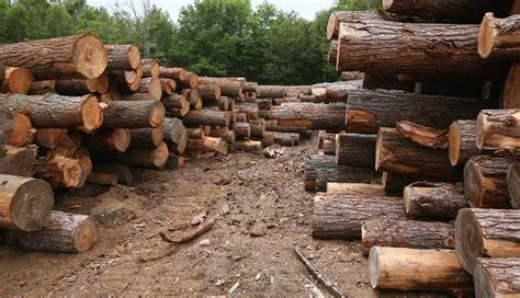 woodworking logs about hemlock