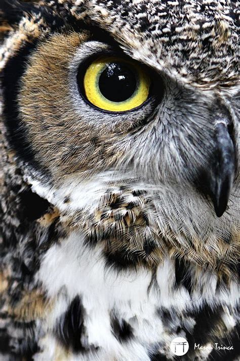 95 Best Owl Images On Animal - 194 best ink images on nightmare before