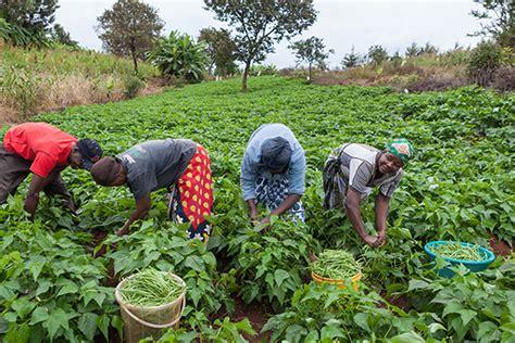 .fadama project turns nigerian farmers into agro preneurs