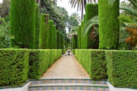 Topiary Spiral - 53 stunning topiary trees gardens plants and other shapes