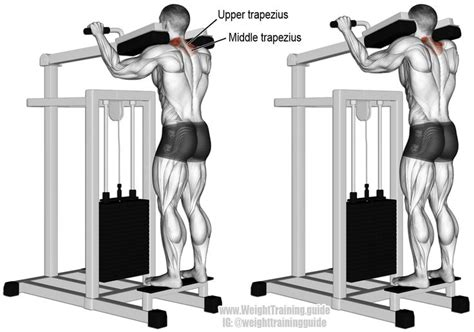 38 best images about back exercises on