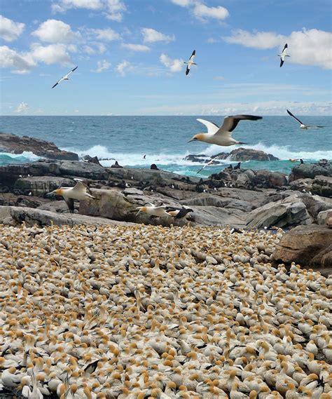 bird bay bird colony