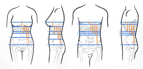 diagram of measure how to measure for a corset by sidney eileen