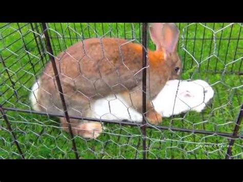animal mating rabbit cat bunny cat mate bunny rabbits mating fast animals mating up