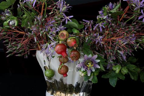 emily thompson flowers flowers in la n tuscany n new york sophia moreno bunge