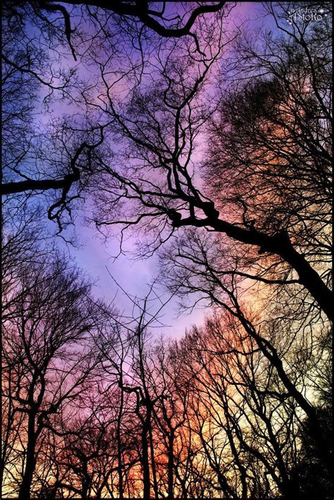 Modern Kitchen Cabinet Colors rainbow sky view through the trees art decoration design