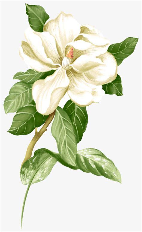 jasmine flower vector www pixshark com images
