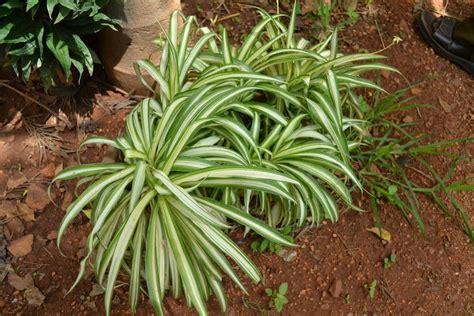 precios de plantas de interior plantas de interior precios great plantas de ikea fotos y