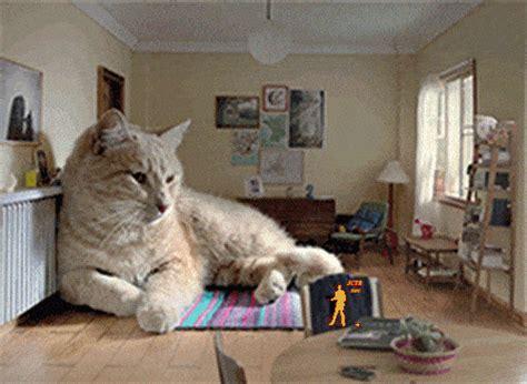 giant cat couch il tribunale di roma ha stabilito che rubare un gatto non