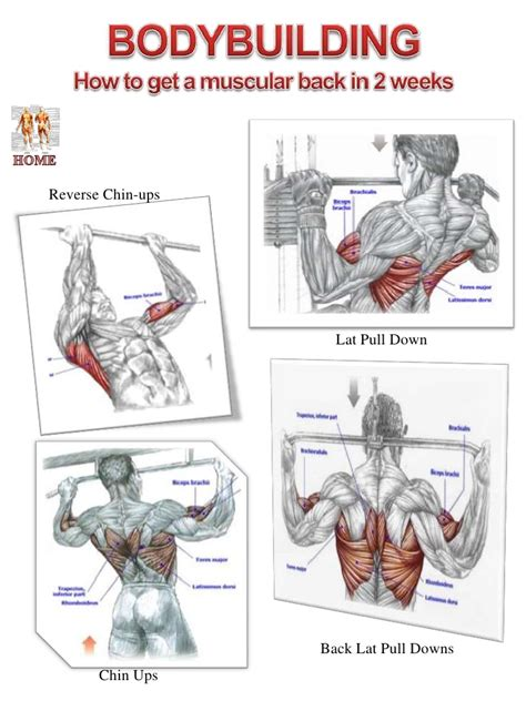 Reverse Grip Bench Press Muscle Diagram Website 2