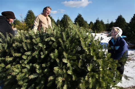 ann arbor area christmas tree farms recession proof but