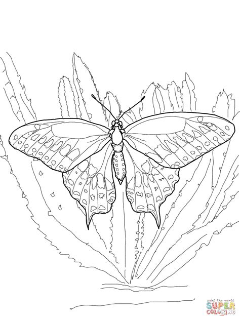 black swallowtail coloring page  printable coloring