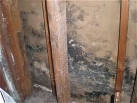 Removing Mold From Drywall Ceiling by How To Remove Mold From Drywall Black Mold Drywall How To Remove And Remove Mold