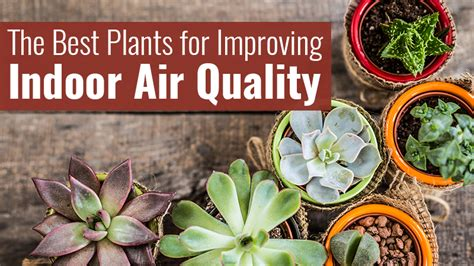 best houseplants for air quality heating cooling archives buckeye heating cooling