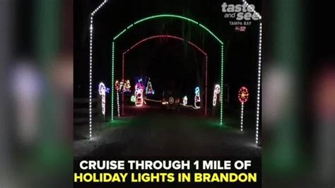 check out these christmas lights in ta bay
