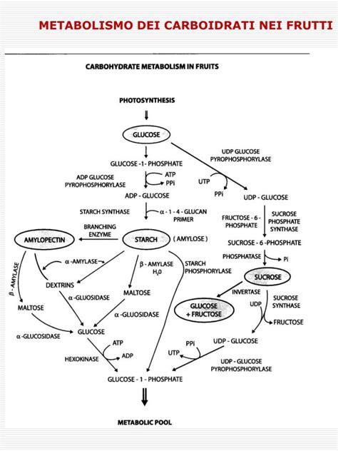 biochimica degli alimenti ppt la biochimica degli alimenti powerpoint presentation