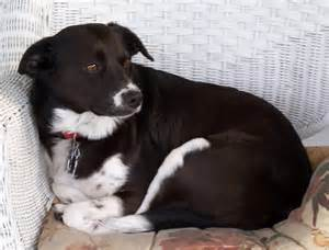 Charlie a mixed breed dog photo credit photo 169 gary