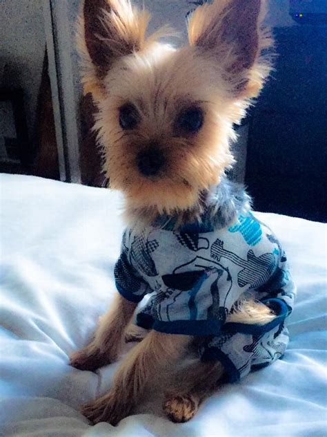 pajamas large breed pj s for dogs large breed images