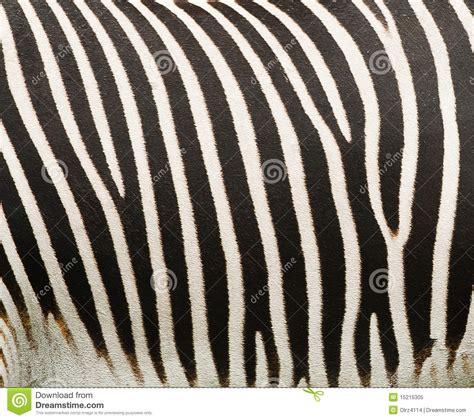 abstract zebra pattern abstract zebra patterns royalty free stock photo image