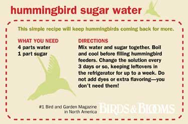 sugar and water solution for hummingbirds sugar