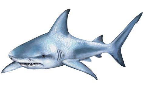 Wall Mural Ocean shark mural wallsofthewild com