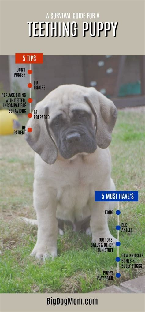 puppy biting stage best 25 puppy biting ideas on a puppy puppy care and