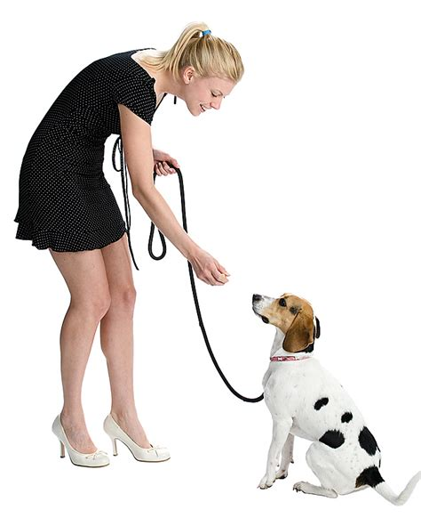 on leash leash walking thedogtrainingsecret the secret
