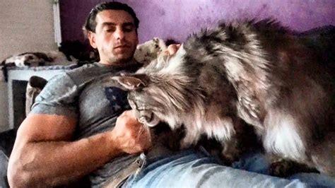 BEAUTIFUL BIG MAINE COON CAT Hélios like OWNER !! So CUTE