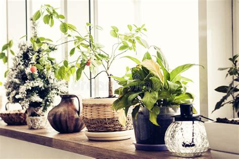 fiori da davanzale piante d appartamento in vasi sul davanzale immagine stock