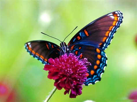 colorful butterflies butterfly desktop wallpapers allfreshwallpaper