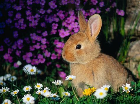 cute rabbits and chicks just in time for some easter cuteness cuteness overflow