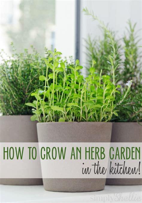 kitchen herbs best 25 patio herb gardens ideas on pinterest gardening