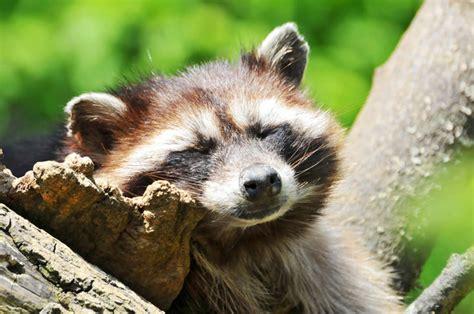 imagenes animales durmiendo animales durmiendo buscar con google sleep pinterest
