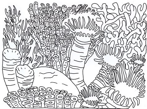 Reef Coloring Pages great barrier reef coloring pages coloring home