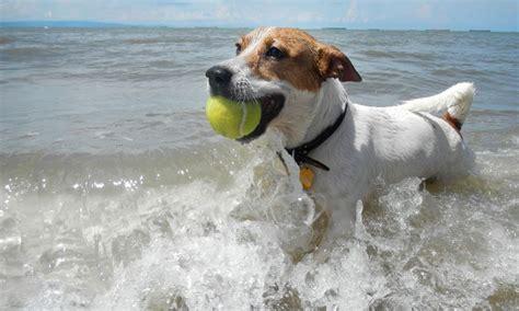 top dog bar nj new jersey shore hotels restaurants events more wildwood