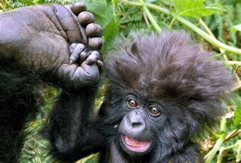 imagenes chistosos monos imagenes de changos feos holidays oo
