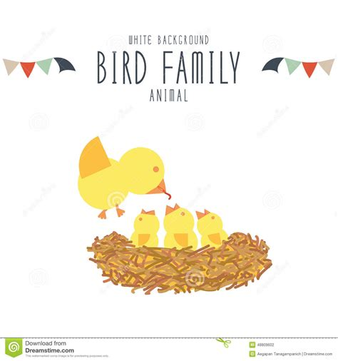 mother bird find food to feed baby birds white